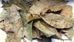 Chaliponga Leaves