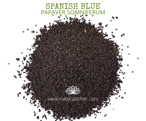 Natural Ether Website Images SPANISH BLUE 2 (1)