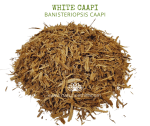 Natural Ether Website Images WHITE CAAPI 2
