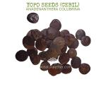 Natural Ether Website Images YOPO SEEDS (CEBIL) 2