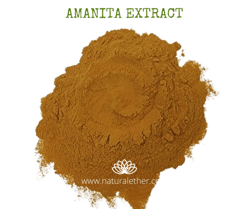 Natural Ether Website Images AMANITA EXTRACT 2