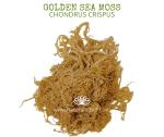 Natural Ether Website Images GOLDEN SEA MOSS 2