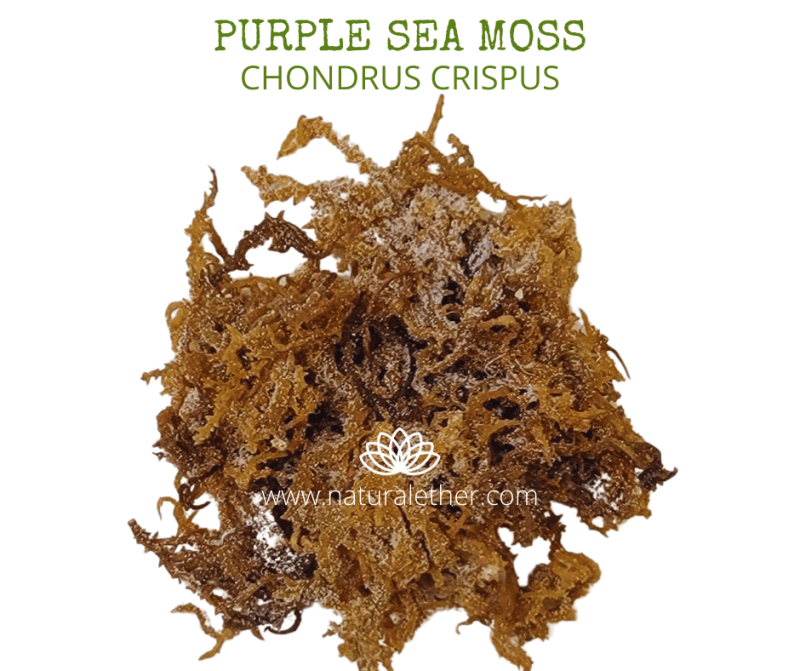 Natural Ether Website Images PURPLE SEA MOSS 2