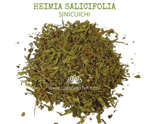 Natural Ether Website Images Heimia Salicifolia 2
