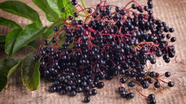 Elderberries health benefits
