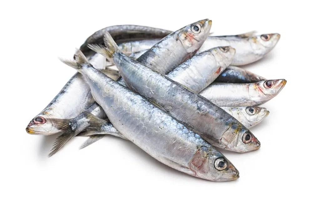 Benefícios surpreendentes para a saúde das sardinhas