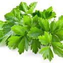 Cilantro Health Benefits