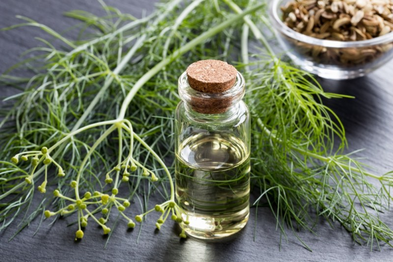 13 Surprising Benefits of Fennel Essential Oil