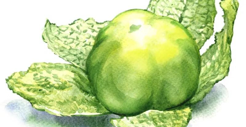 11 Amazing Health Benefits of Tomatillos