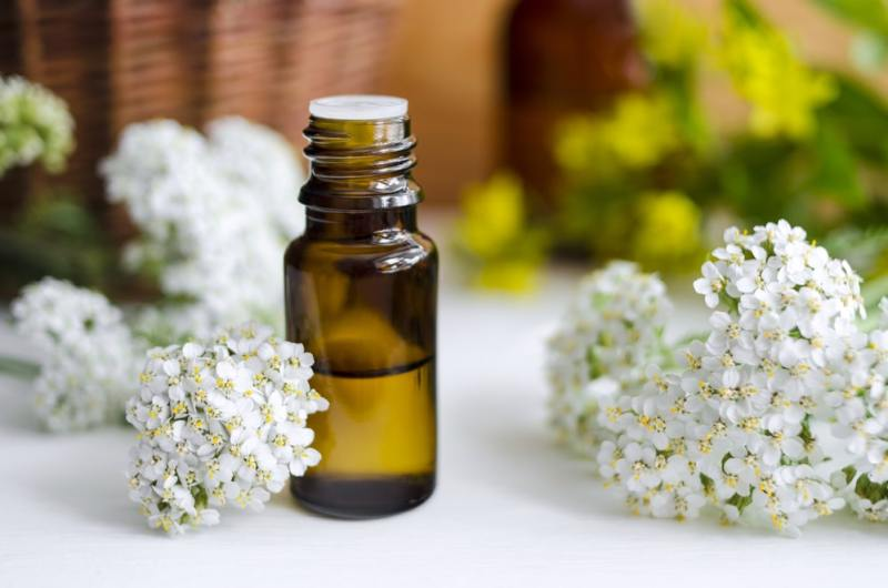 20 Best Benefits of Yarrow Essential Oil