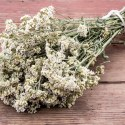 11 Amazing Health Benefits of Yarrow