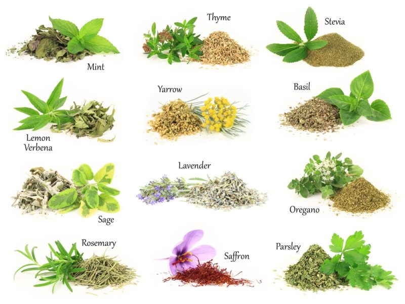 Image result for images of benefits of herbal