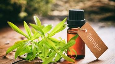 Tarragon Essential Oil health benefits