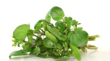 19 Impressive Health Benefits of Watercress