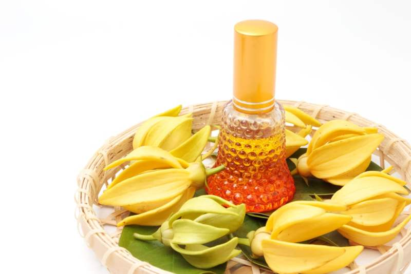 11 Amazing Health Benefits of Ylang-Ylang Essential Oil