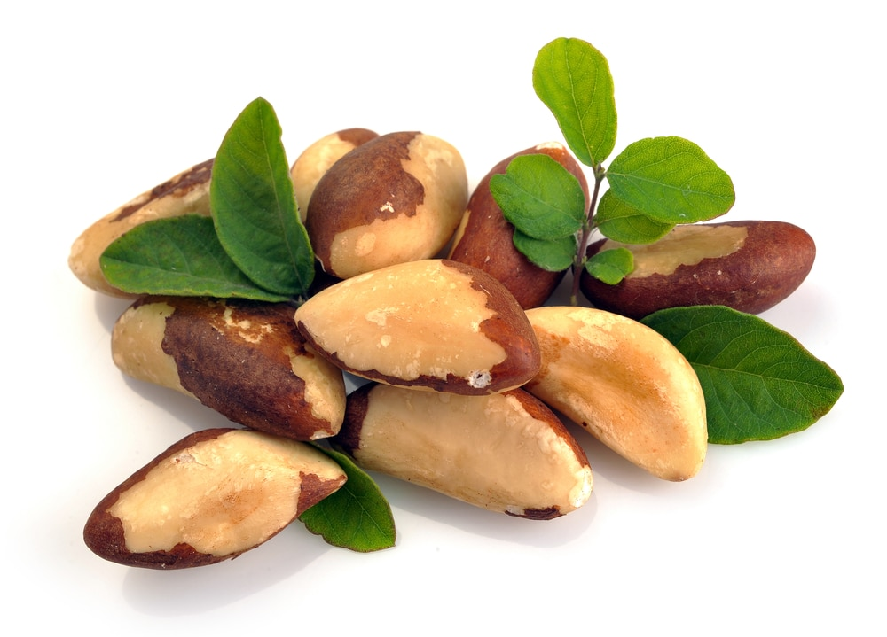 13 Benefícios de Saúde Surprising Of Brazil Nuts