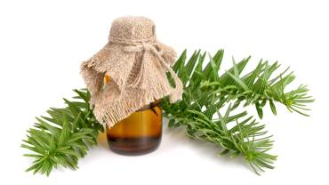 11 Amazing Benefits Of Fir Needle Essential Oil