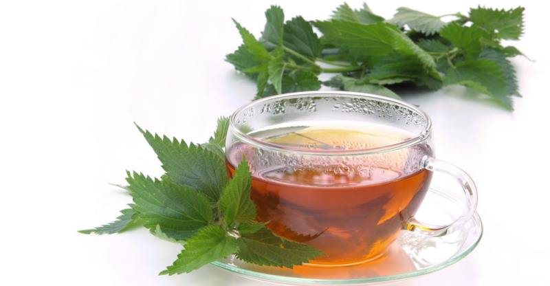 11 Amazing Health Benefits of Nettle Tea