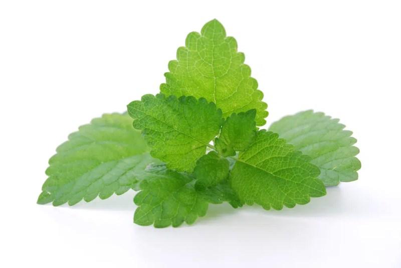 Benefícios à saúde surpreendentes da erva-cidreira