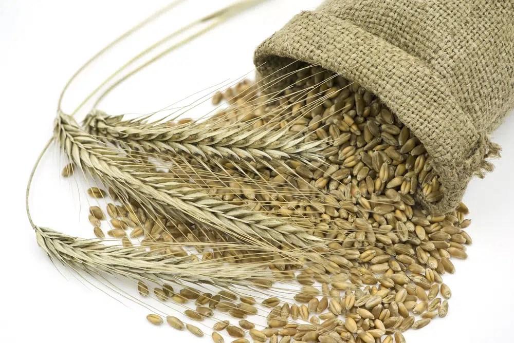 Benefícios surpreendentes para a saúde do centeio