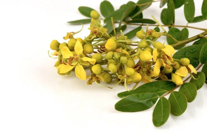 13 Amazing Health Benefits of Senna Plant