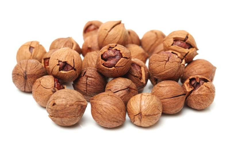 11 Amazing Benefits of Hickory Nut