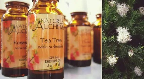 tea tree as anti lice