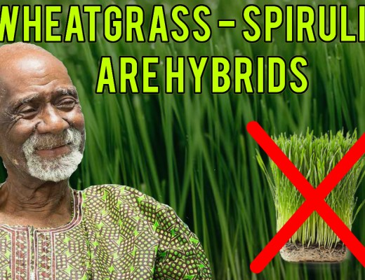 Dr Sebi Wheatgrass