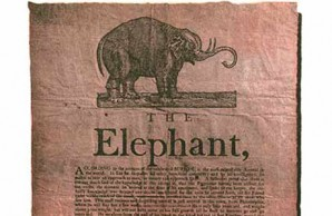The first elephant in America walked inn Salem, MA.