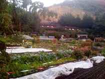Esalen central garden 300dpi 2 6x2in