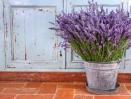 11 plantas que repelem mosquitos
