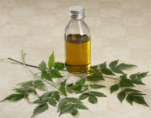 Neem Oil is Hidden in The Treatment of Every Disease 8 Best Tips