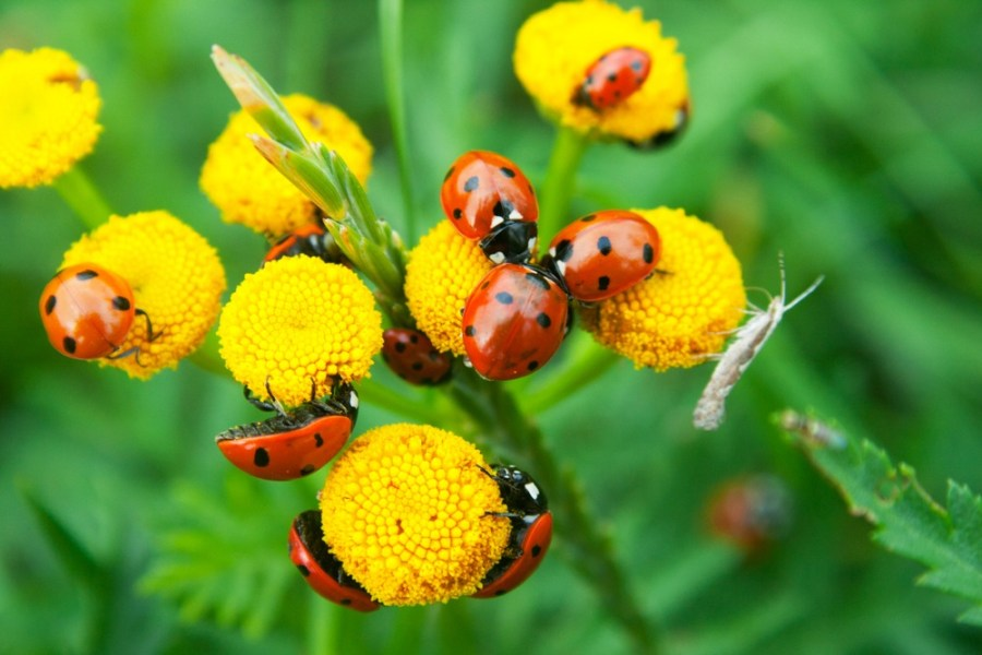 12 Beneficial Insects For Your Garden & How To Attract Them