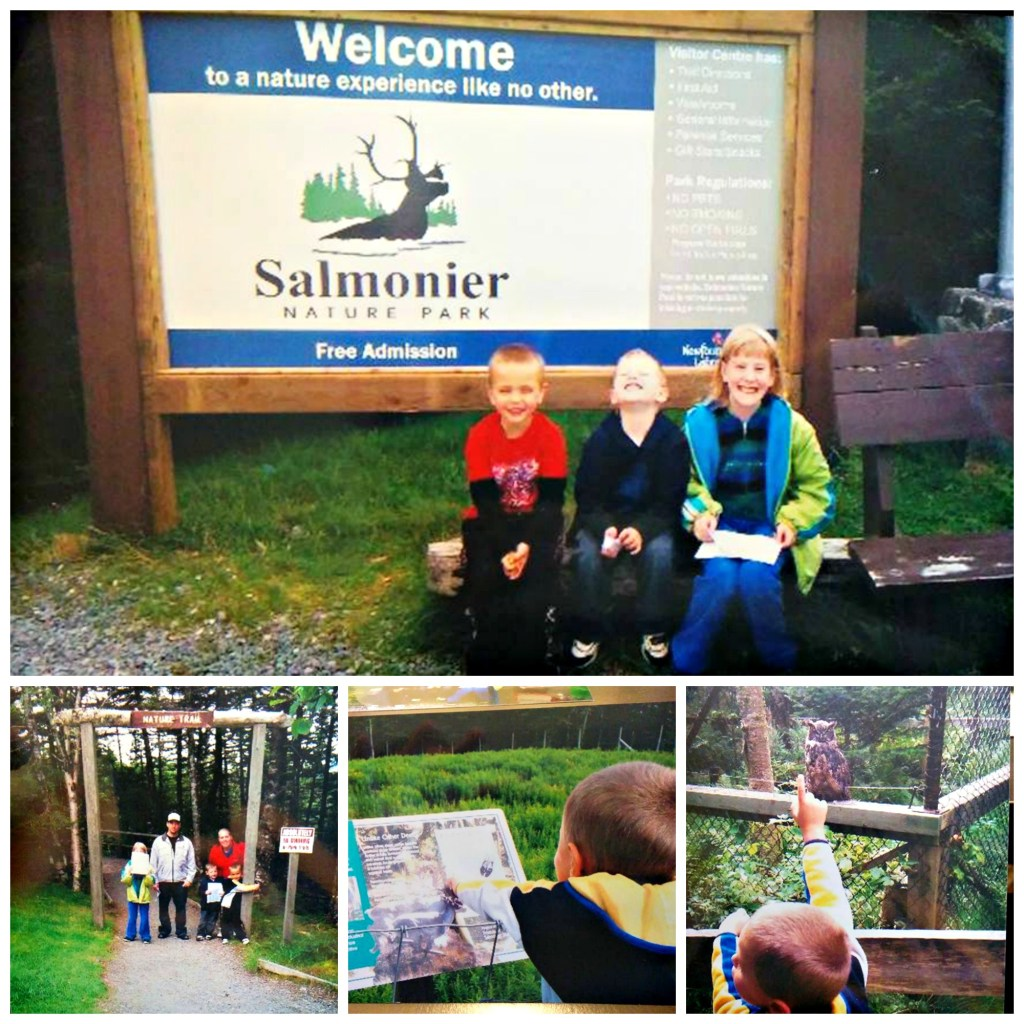 4 Free Places to visit while in Newfoundland Salmonier Nature Park