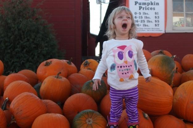 ThePumpkinPatch-E