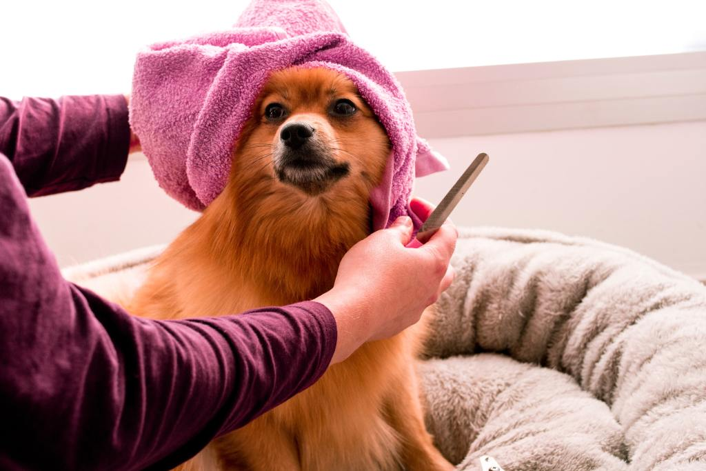 Transform your dog's bath time into a spa day!