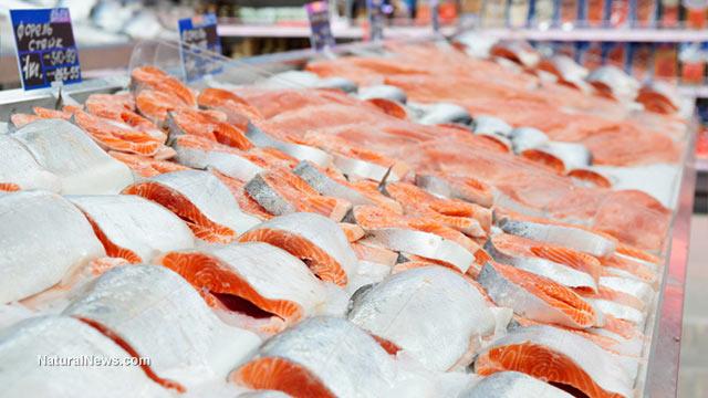 轉基因鮭魚