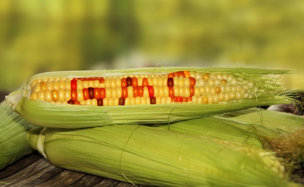 Image: 16 countries in the EU vote against GM crops as GMO backlash sweeps the globe