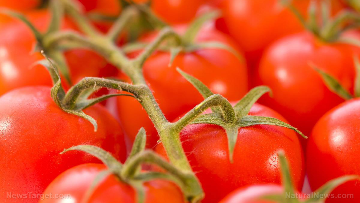 Image: Promising study reveals whole tomato extract found to treat deadly stomach cancer