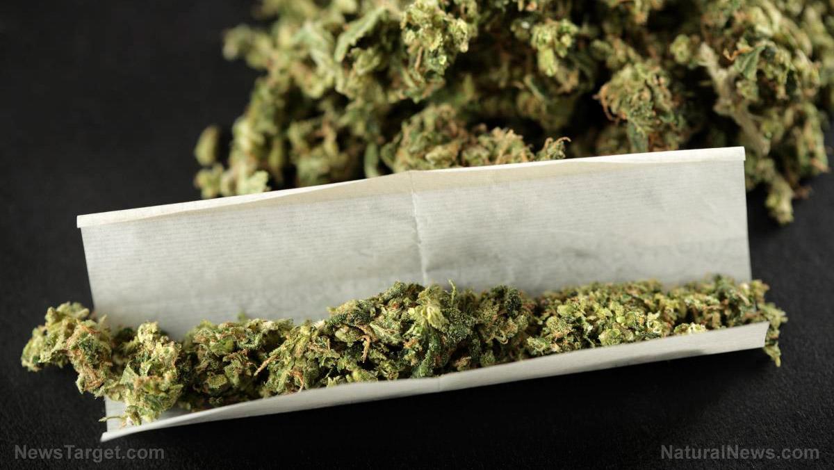 "Image: France is ""decriminalizing"" cannabis nationwide"