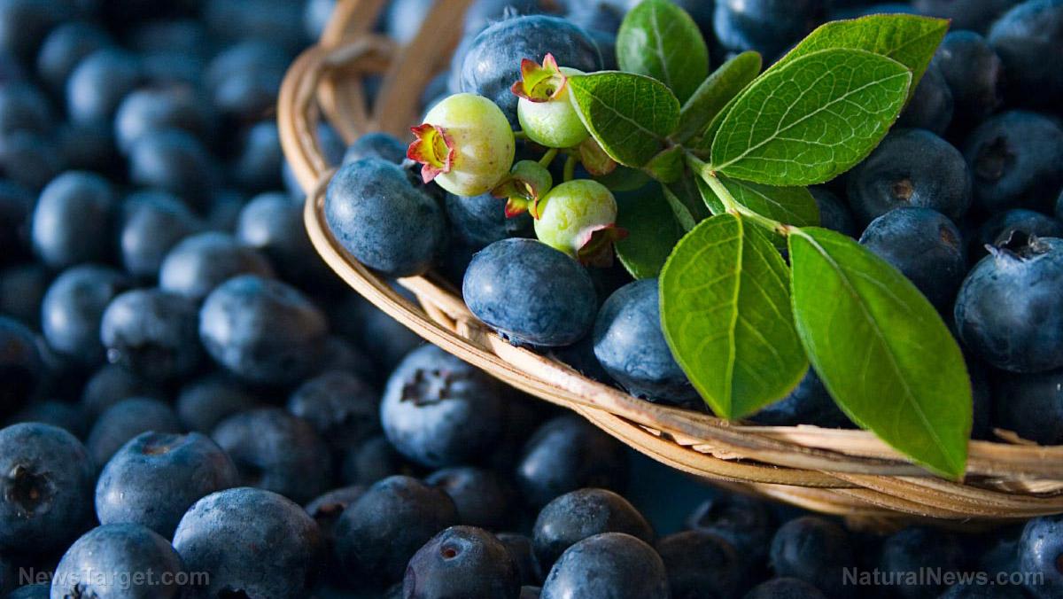 圖片:5藍莓證明健康的好處