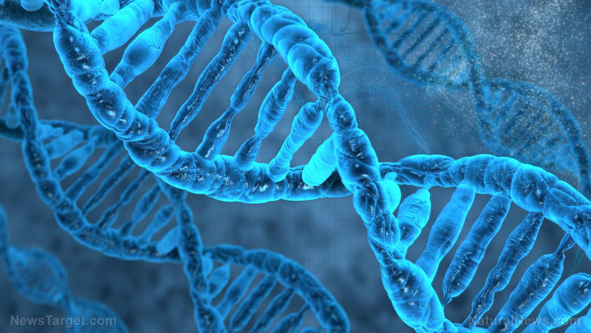 """Image: Living beings can be turned into programmable computers through """"RNA circuits"""""""