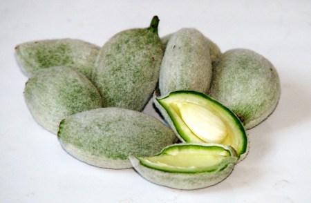almond oil for hair - almond hulls