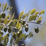 Eliminate Dry Hair & Scalp Issues with Jojoba Oil