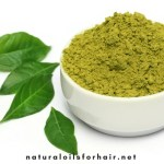 How to Keep Grey Hair Away with Mustard Seed Oil & Henna