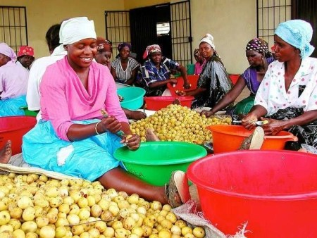 women in south africa working on marula fruit