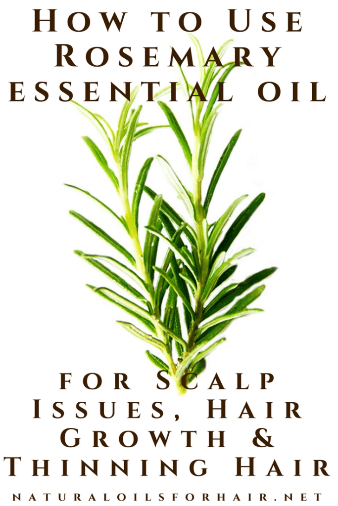 Rosemary Oil for Scalp Issues, Hair Growth & Thinning Hair