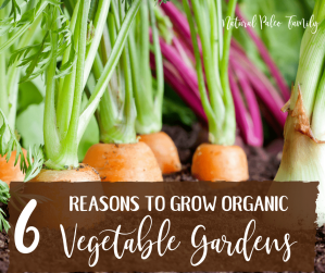 Many people think that it's a lot of work to grow organic vegetable gardens; and while they are correct, it's also fun and fulfilling work that comes with great rewards.