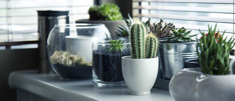 Cactus et plantes vertes