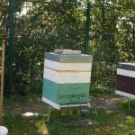 Chasse abeilles - Pose